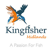 Kingfisher Midlands